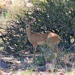 namibia_2012_12_28_153348_1-2-copy-2